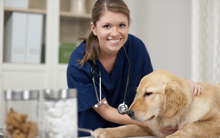 Veterinary Technologist